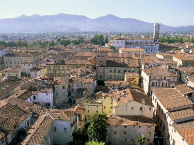 View South from Guinici Tower of City Rooftops and Cathedral, Lucca, Tuscany, Italy