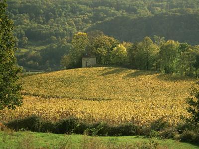 Vineyards in Autumn, Near Arbois, Jura, Franche Comte, France