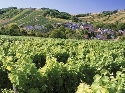 Vineyards at Bue, Near Sancerre, Loire Centre, France