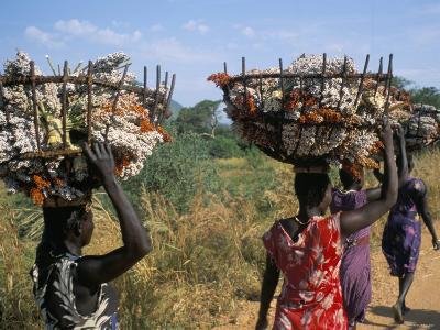 Nuer Women Carrying Sorghum, Gambella Region, Ilubador State, Ethiopia, Africa