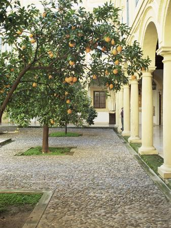 Orange Tree in Courtyard, Cordoba, Andalucia, Spain