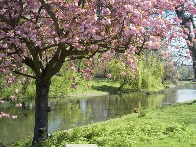 Blossom, Regents Park, London, England, United Kingdom