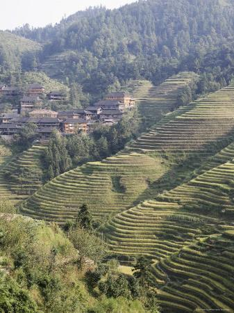 Longsheng Terraced Ricefields, Guilin, Guangxi Province, China