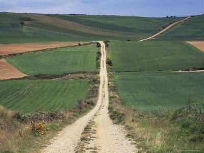 Grain Fields Between Najera and Azofra, La Rioja, Spain