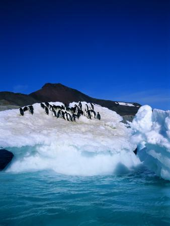 Iceberg and Adelie Penguins, Antarctica, Polar Regions