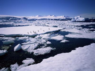 Adelie Penguins on Ice Floe, West Coast, Antarctic Peninsula, Antarctica, Polar Regions