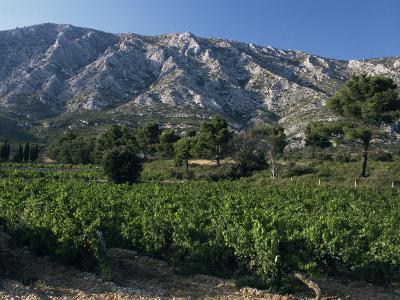 Vineyards and Montagne Ste. Victoire, Near Aix-En-Provence, Bouches-Du-Rhone, Provence, France