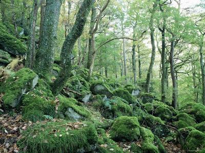 Strutta Wood, Near Ashness Bridge, Borrowdale, Lake District, Cumbria, England