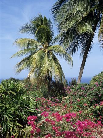Andromeda Gardens, Near Bathsheba, Barbados, West Indies, Caribbean, Central America