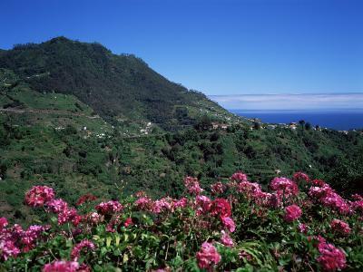 Landscape Near Sao Roque Do Faial, Island of Madeira, Portugal, Atlantic