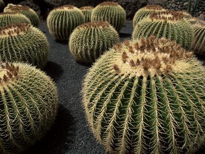 Jardin De Cactus Near Guatiza, Lanzarote, Canary Islands, Spain