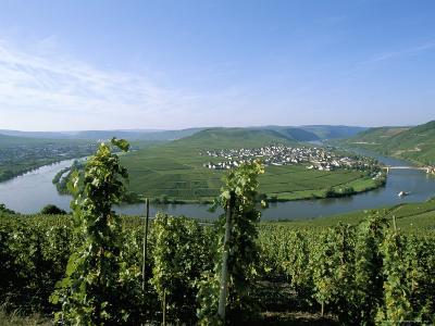 Vineyard Near Trittenheim, Mosel Valley, Rheinland-Pfalz (Rhineland-Palatinate), Germany