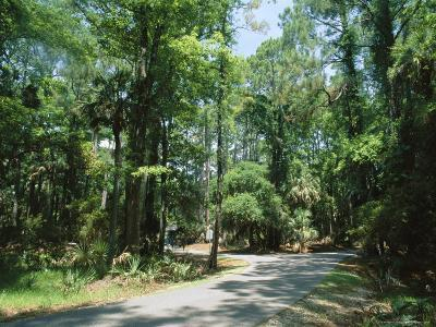 Sub Tropical Forest, Hunting Island State Park, South Carolina, USA
