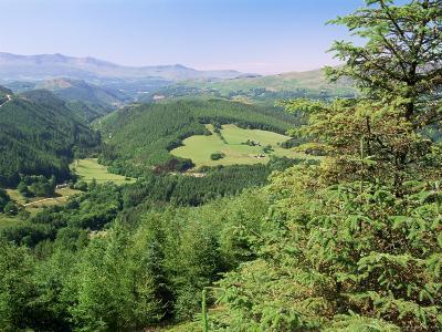 Coed Y Brennin Forest, Near Dolgellau, Snowdonia National Park, Gwynedd, Wales