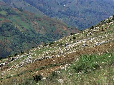 People Working in Steep Mountain Fields, at 2000M, Haiti, West Indies, Central America