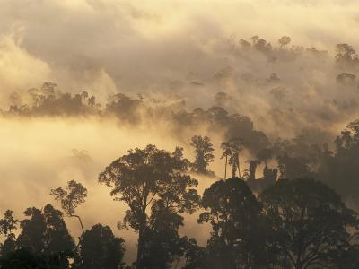 Rain Forest, Borneo, Southeast Asia