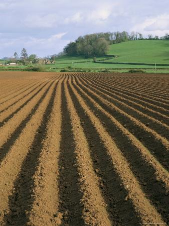 Ridged Soil in Ploughed Field, Somerset, England, United Kingdom