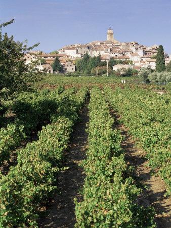 Vineyard, Cote Du Rhone, Sablet, Vaucluse, Provence, France