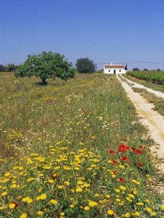 Wild Flowers Near Tavira, Algarve, Portugal