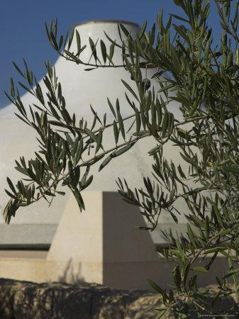 Close up of the Shrine of the Book, with Olive Tree Branches, Israel Museum, Jerusalem, Israel