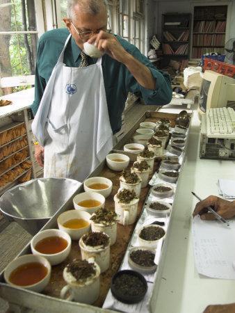 Ravi Kidwai, Tea Specialist, Tasting and Assessing Tea, Kolkata