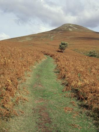 The Sugar Loaf, in Autumn, Black Mountains Near Abergavenny, Monmouthshire, Wales