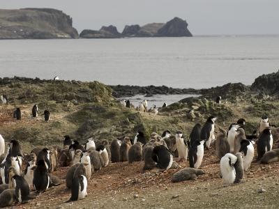 Chinstrap Penguins, Aitcho Island, South Shetland Islands, Antarctica, Polar Regions