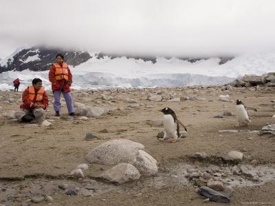 Tourists Looking at Gentoo Penguins, Neko Harbor, Gerlache Strait, Antarctic Peninsula