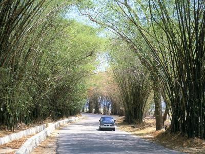 Bamboo Avenue, St. Elizabeth, Jamaica, West Indies, Central America