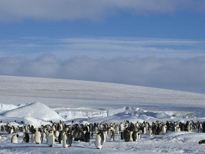 Colony of Emperor Penguins (Aptenodytes Forsteri), Snow Hill Island, Weddell Sea, Antarctica
