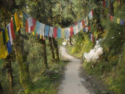 Path and Prayer Flags, Mcleod Ganj, Dharamsala, Himachal Pradesh State, India