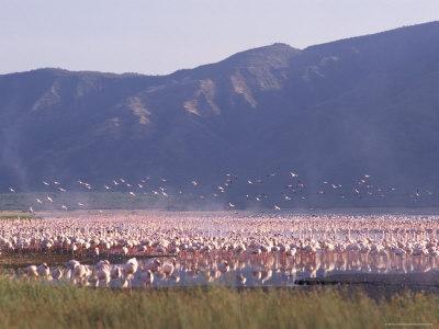 Flamingos, Lake Bogoria, Kenya, East Africa, Africa