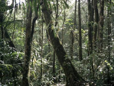 Lowland Dipterocarp Forest, Kota Kinabalu National Park, Sabah, Malaysia, Island of Borneo