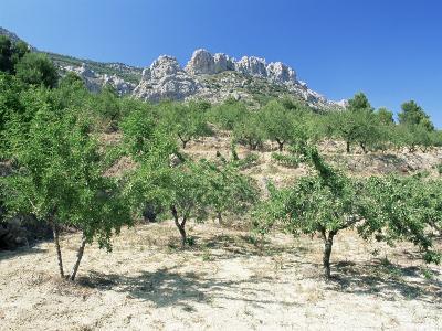 Almond Trees in the Sierra De Aitana, Alicante Area, Valencia, Spain