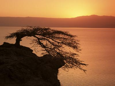 Acacia Tree Silhouetted Against Lake at Sunrise, Lake Langano, Ethiopia, Africa