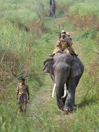 Game Guards Patrolling on Elephant Back, Kaziranga National Park, Assam State, India
