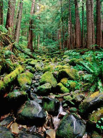 Rainforest in Sol Duc Rain Forest, Olympic National Park, Washington