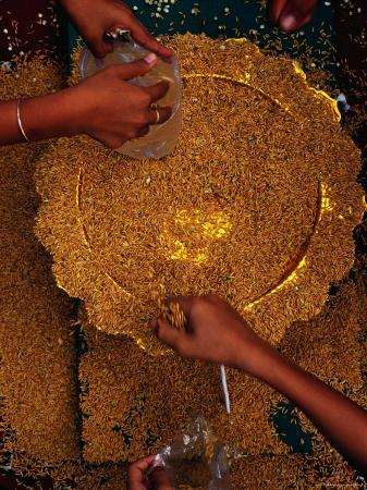 People Collecting Rice Seed from Plate During the Royal Ploughing Ceremony, Phnom Penh, Cambodia