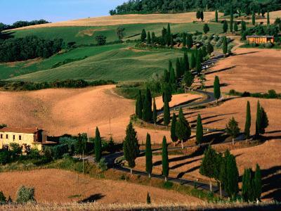 Cypress-Lined Montichiello Road, So of Pienza, Val d'Orcia, Tuscany, Italy