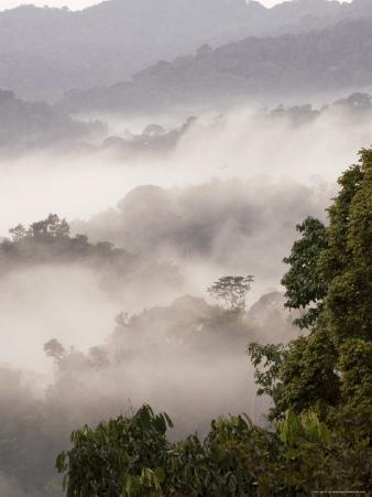Mist Rising from Forest Floor, Nyungwe Forest National Park, Gisenyi, Rwanda
