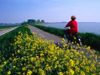 Woman Cycling Atop Polder Dike, Netherlands
