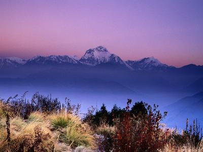 Sunrise over Mountains with Plants in Foreground, Poon Hill, Gandaki, Nepal