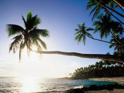 Sun Shining Off Water and through Palm Tree at Return to Paradise Beach, Upolu, Samoa