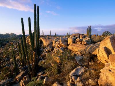 Cacti and Boulder Field, Catavina, Ensenada, Baja California, Mexico