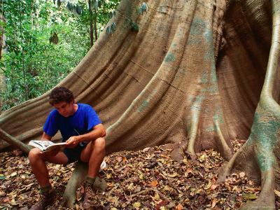 Scientist on a Buttress Root in the Rainforest, Lockhart River Aboriginal Community, Australia