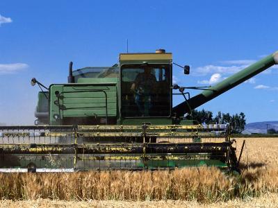 Wheat Harvester, Newell, Tule Lake, California