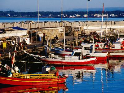Fishing Boats in Harbour, Punta del Este, Maldonado, Uruguay