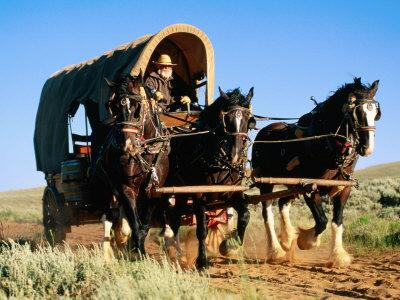 Mormon Man Driving Horse Carriage, Mormon Pioneer Wagon Train to Utah, Near South Pass, Wyoming
