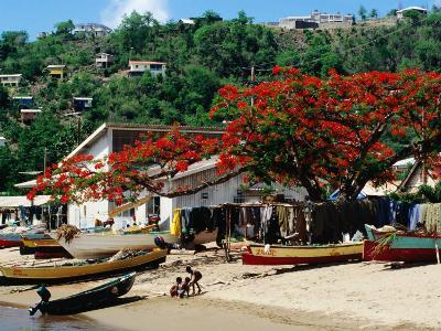 Beach with Flamboyant Tree on Anse la Raye, Anse la Raye