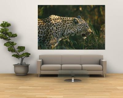 A Leopard Stalks its Prey